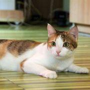 Katze Lorena sitzt auf gepackten