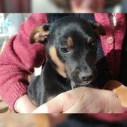 Jung-Hunde Mix 4 Monate suchen