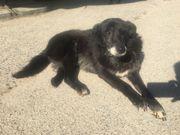 Hundemädchen Lyka, Notfall