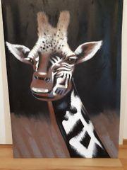 Bild Giraffe auf