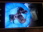 Katzen Babys zum verschenken weibchen