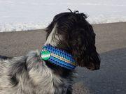 Hundehalsbänder Hundeleinen und Pferdechmuck