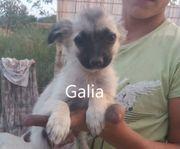 Hundemädchen Galia sucht ihr