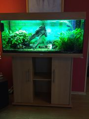 Aquarium Juwel Rio 180 mit