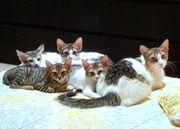 Pflegestellen für Katzen gesucht