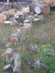 Frisches Brennholz nur gesamt abzugeben