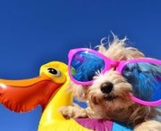 Urlaube und Haustiere