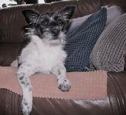 Foxy, 7 Monate,