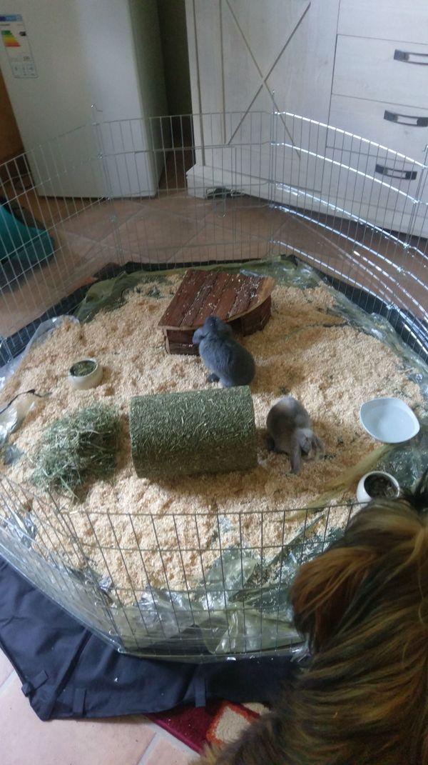 Kaninchen 2 junge » Kleintiere