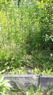 Maschendrahtzaun, grün, 10