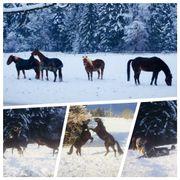 Pferdebox, Paddock, Stellplätze
