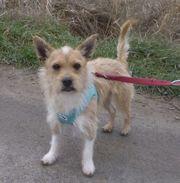 ROCKY --- ein kleiner Hund sucht
