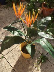 Blume mit Übertopf