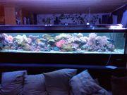Meerwasseraquarium 3m lang *