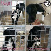 Süße Bugri sucht