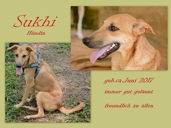 Sukhi hat immer gute Laune - Burladingen - MischlingerwachsenSukhi hat immer gute Laune Geboren ca. Juni 2017Kastriert: jaIn Padmas Tierheim auf Sri Lanka gilt Sukhi als absoluter Gute-Laune-Hund. Sie ist freundlich zu Artgenossen, Katzen und Menschen. Daher hat sie auch ihren Namen, - Burladingen
