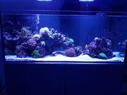 400L Meerwasser Aquarium inkl Garantie