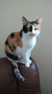 Katze Ella sucht