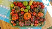 Tomatenpflanzen 70 Sorten