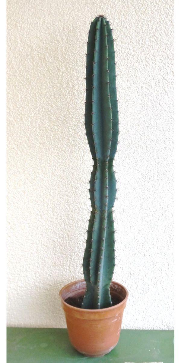 Großzügig Kaktus Zaunkönig Färbung Seite Zeitgenössisch - Framing ...