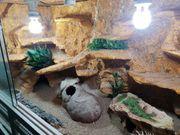 Terrarium und Zubehör für Leopardgeckos