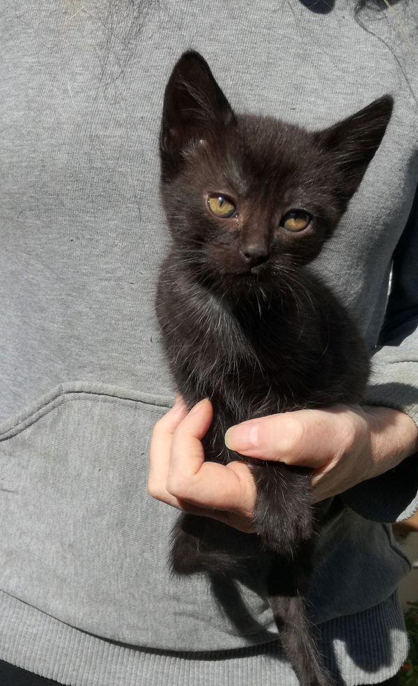 Katzenbaby abzugeben » Katzen