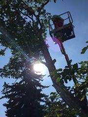Baumfällung Baum fällen