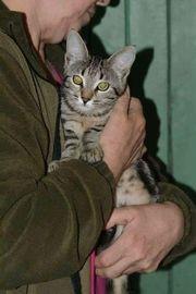 Kalie sucht ein Zuhause - Tierschutz