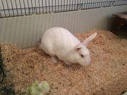 2 Kaninchen + Außenstall