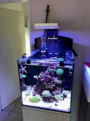 Aqua Medic Blenny