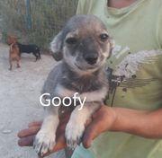 Goofy - 4 Mon kinderlieb freundl