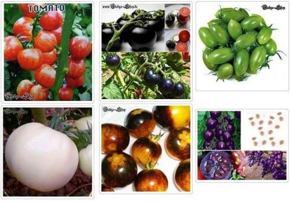 10 Tomatensamen Versch Farben Gemuse Tomaten Samen Anzucht In
