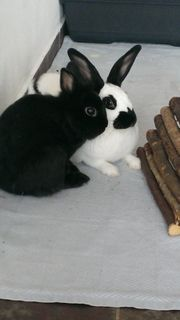 Kaninchenpaar sucht neues