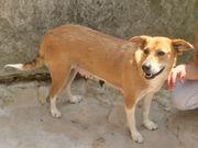 Hera- Verlasshund -kinderfreundlich -