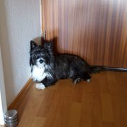 Bubi 1 jähriger Rüde