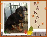 Barney trauert, wo