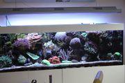 Verkaufe Meerwasseraquarium 900l