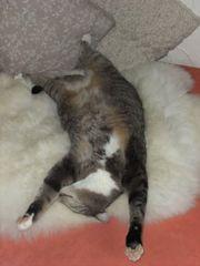 Die kleine Katzenpension