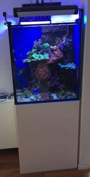 Meerwasser-Aquarium komplett mit Inhalt