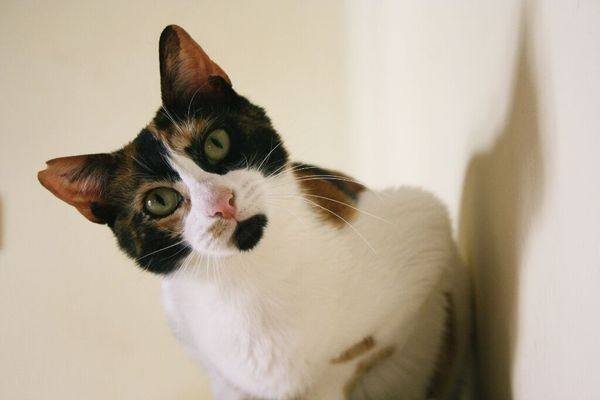 Glückskatze Trina sucht » Katzen