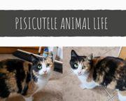 Sophie Katze aus dem Tierschutz
