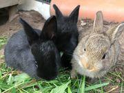 3 süße Kaninchen