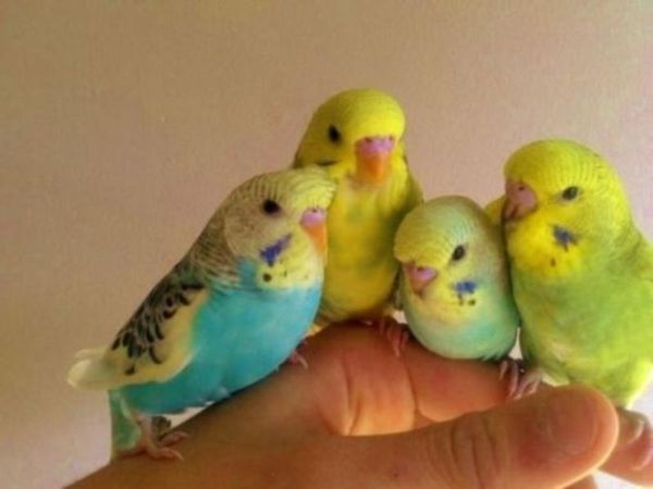Vogel partnervermittlung