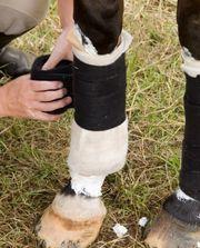 Pferde OP Versicherung - Vergleich preiswerter