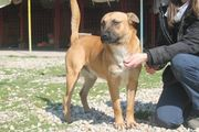 Gemeinnütziger Tierschutzverein sucht