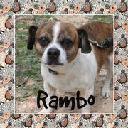 RAMBO - Franz.-Bulli-