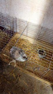 susse Kaninchen zu