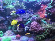 Korallenableger aus Kempten von privat