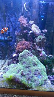 Meerwasseraquarium 200l,inkl.