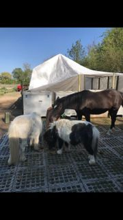 Reitbeteiligung, Pferdebetreuung